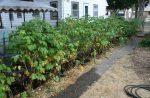 Как огородить малину – Как и чем огородить малину, чтобы она не разрасталась по участку: эффективные меры