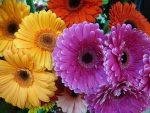 Ромашковидные цветы названия – как называются и как выглядят, описание